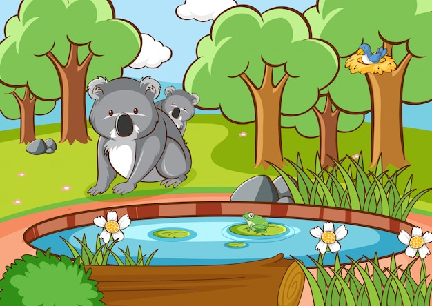 Szene mit koala im wald