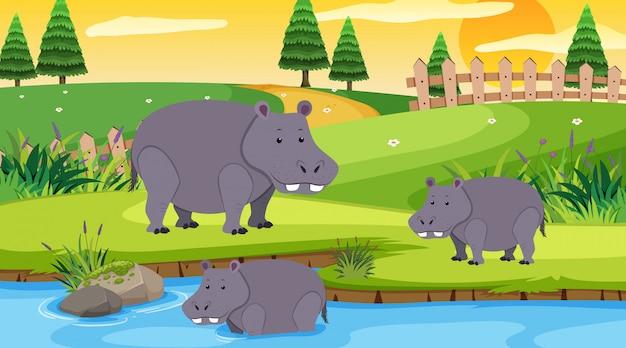 Szene mit nilpferd im offenen zoo