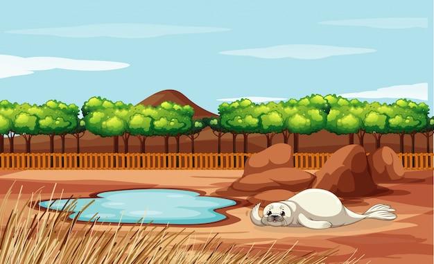 Szene mit siegel im zoo