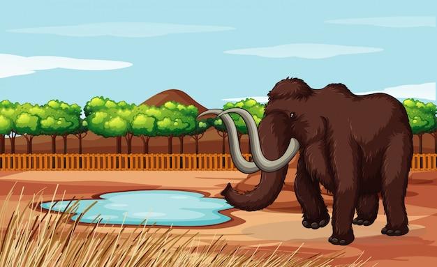 Szene mit wolligem mammut auf dem gebiet