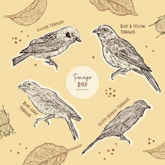 Tanager-vogelsammlung, handzeichenskizze.