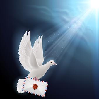 Taube weiß
