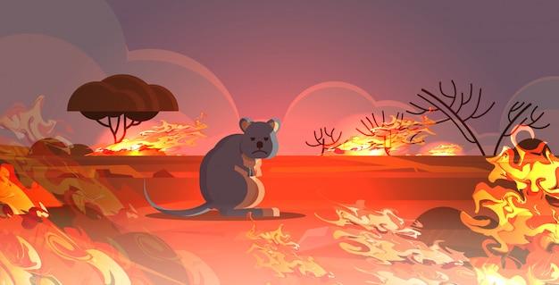 Taubheitsgefühl, das von den bränden in australien-tieren sterben in den intensiven orange horizontalen flammen des verheerenden naturkatastrophenkonzeptes des buschfeuers entgeht