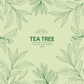 Tee baum. gezeichneter kräuterhintergrund des vektors hand