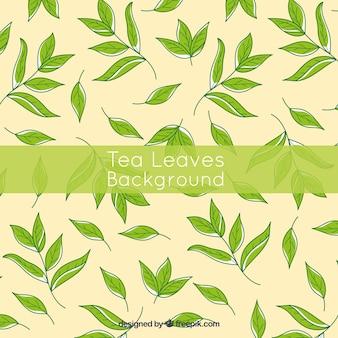 Teeblätter hintergrund