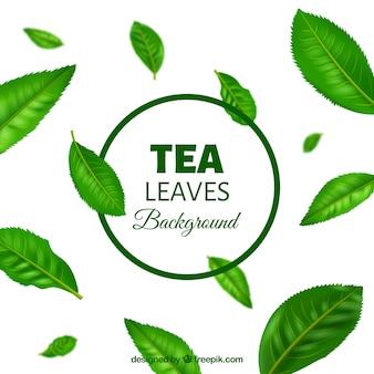 Teeblätterhintergrund in der realistischen art