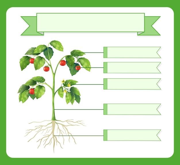 Teile eines pflanzenarbeitsblattes für kinder schreiben