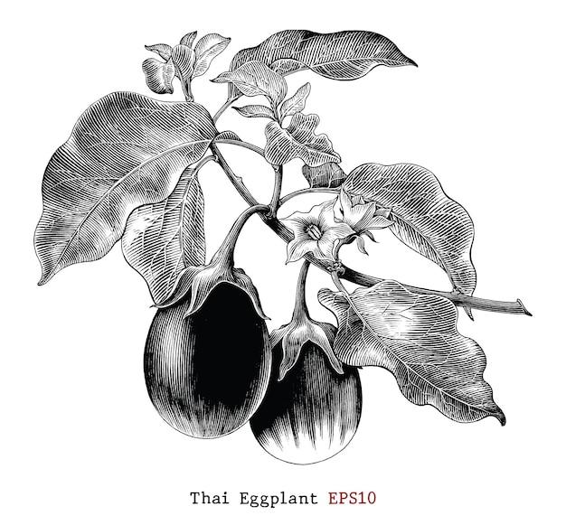 Thailändische aubergine botanische illustration im vintage-stil vintage