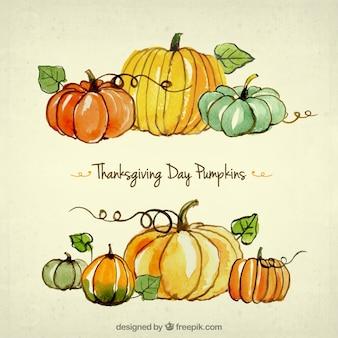 Thanksgiving day kürbisse
