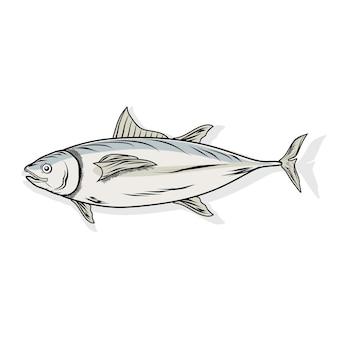 Thunfisch auf weiß