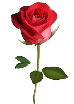 Tiefrote, rosafarbene blume mit grünen blättern, skizzenart-vektorillustration lokalisiert auf weißem hintergrund. realistische handzeichnung der offenen roten rose, symbol der liebe, dekorationselement