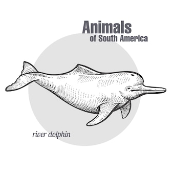 Tier des südamerika-flussdelphins.