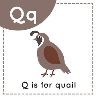 Tieralphabet-karteikarte für kinder. buchstaben q lernen. q steht für wachteln.