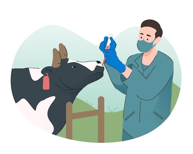 Tierarzt, der einer kuh medizin gibt