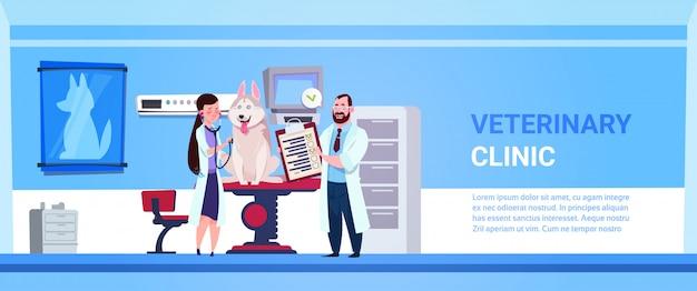 Tierarzt-doktoren, die hund in der klinik-büro-veterinärmedizin-konzept-fahne überprüfen