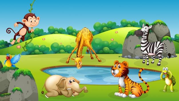 Tiere an der naturszene