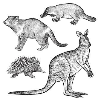 Tiere aus australien. tasmanischer teufel, schnabeltier, wallaby oder känguru und echidna.