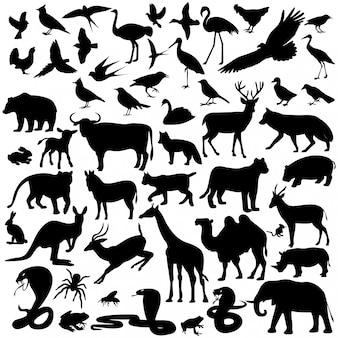 Tiere, bildtiere