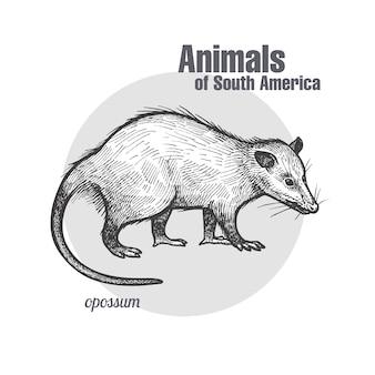 Tiere des südamerika-opossums.
