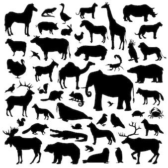 Tiere suilhouette großes set