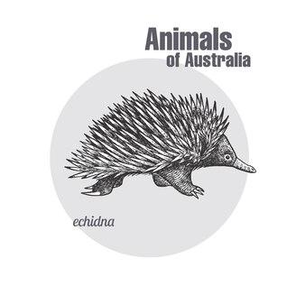 Tiere von australien. echidna.