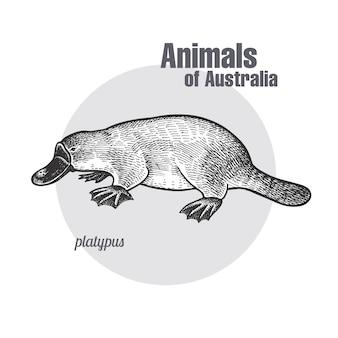 Tiere von australien. schnabeltier oder entenschnabel.