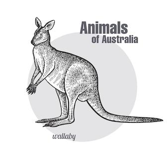 Tiere von australien. wallaby oder känguru.