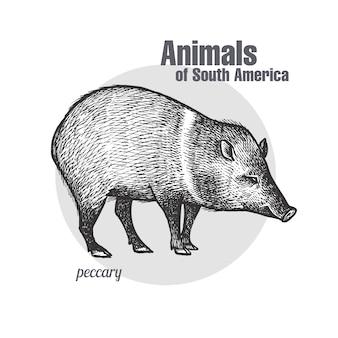 Tiere von südamerika peccary.