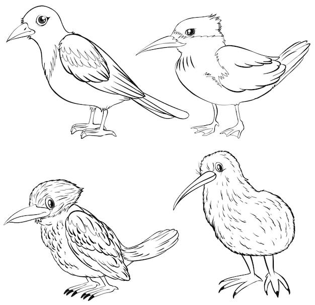 Tierumriss für vier vogelarten