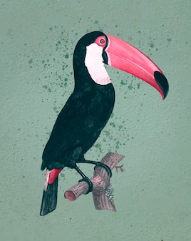 Toco tukan vintage illustration
