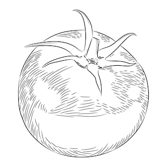 Tomaten ganze skizze zeichnen aus der kontur schwarze pinsellinien unterschiedlicher dicke