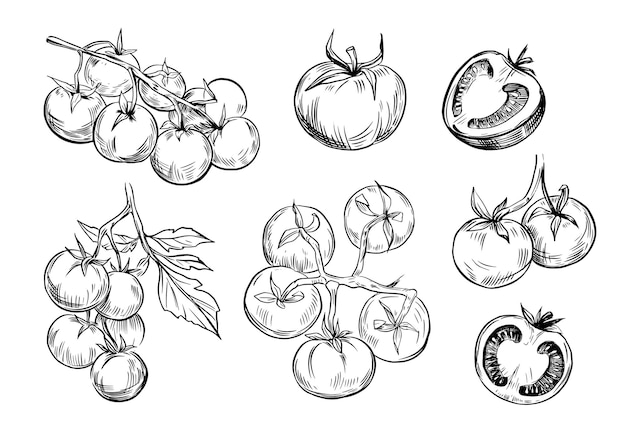 Tomatenskizzen-strichzeichnungen setzen illustrationen
