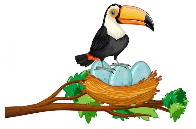 Toucan sitzt auf nest von eiern