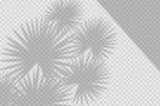 Transparente schatten überlagern den effekt mit pflanzen