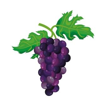Traubenfruchtvektor
