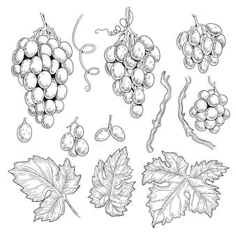 Traubenkritzeleien. wein symbole für restaurant menü grafiken gravur traubenblätter vektor hand gezeichnete sammlung. weinrebe für weinlese-restaurantmenüillustration