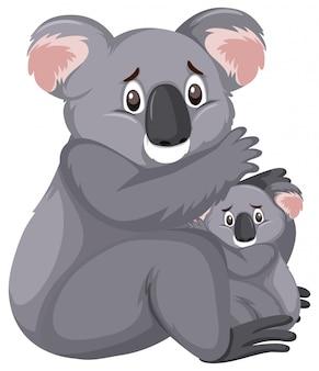 Traurig aussehende koalas isoliert