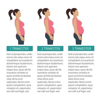 Trimester-plakat der schwangerschaft drei