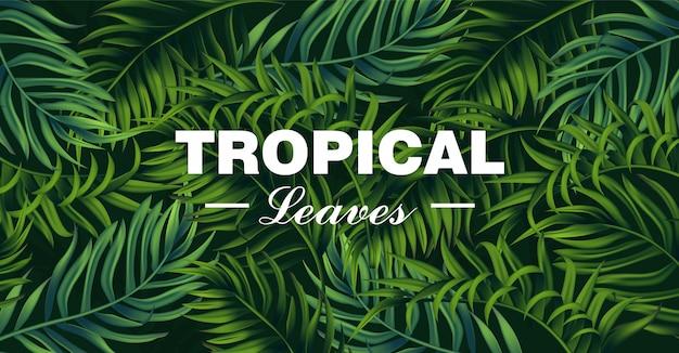 Tropic blätter karte