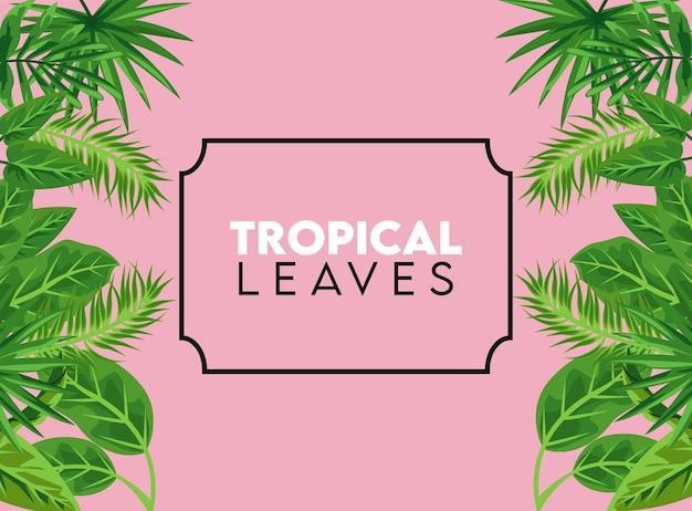 Tropische blätter beschriften mit blättern im quadratischen rahmen im rosa farbhintergrund