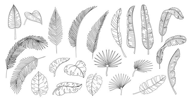 Tropische blätter der strichzeichnungen. umreißen sie die hawaiianischen blätter der waldpalme monstera farn. handgezeichnete tropische elemente-vektor-illustration.