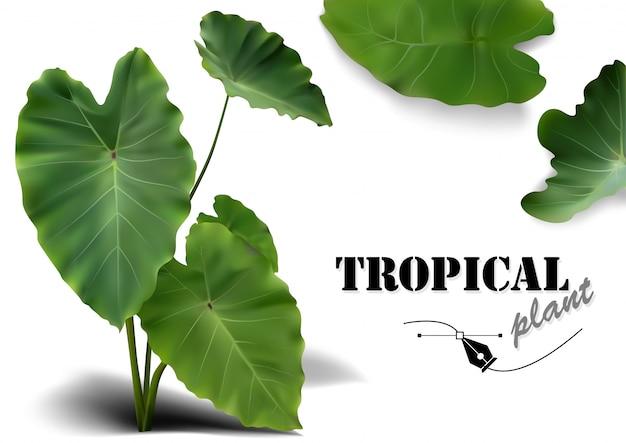 Tropische blätter eingestellt - photorealistic und ausführliche betriebsabbildungen