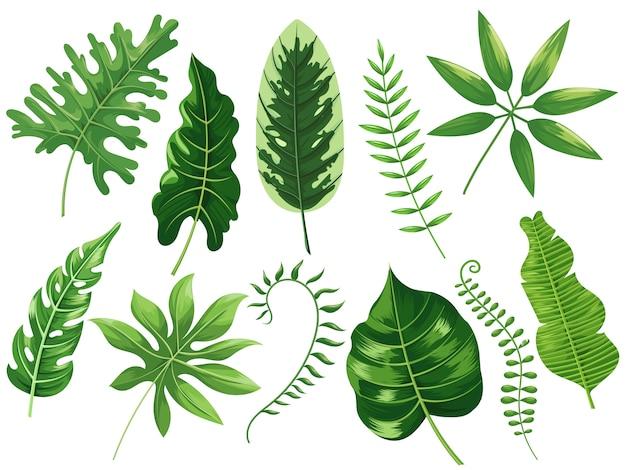 Tropische blätter. exotisches tropisches blatt, botanischer regenwald und tropenreiseblätter, die karikatur lokalisierten illustrationssatz malen