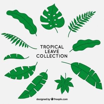 Tropische blätter sammlung