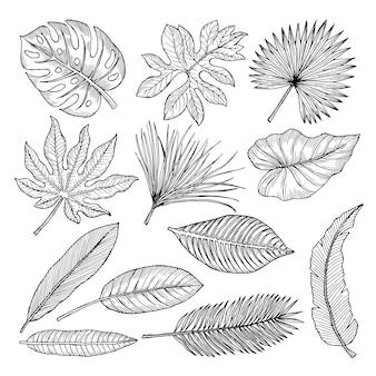 Tropische blätter und pflanzen. vektorhandzeichnungs-bildisolat