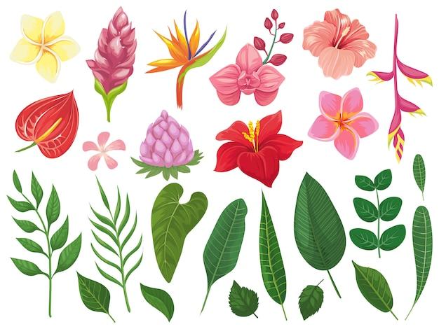 Tropische blumen. tropenblumenblätter, sommerblatt auf zweig und tropische wildpflanzenblätter-illustrationssatz