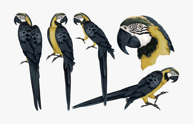 Tropische exotische ara-vogelillustration.