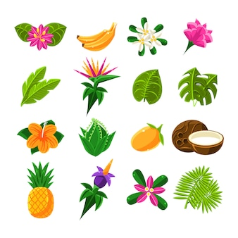 Tropische exotische früchte und flora satz von ikonen