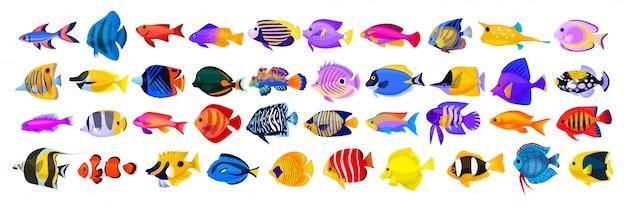 Tropische fischkarikaturikone. isolierte karikaturikone-aquarientiere. tropischer fisch der vektorillustration auf weißem hintergrund.