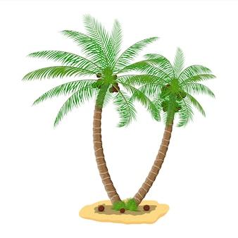 Tropische grüne palme. dschungel geht